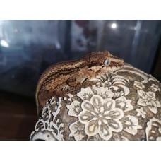 Gecko gárgola - Rhacodactylus auriculatus