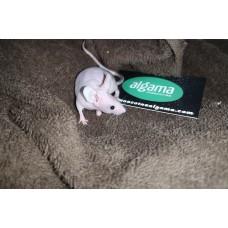 Ratón calvo Chino