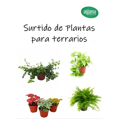 Surtido de plantas naturales para terrarios tropicales